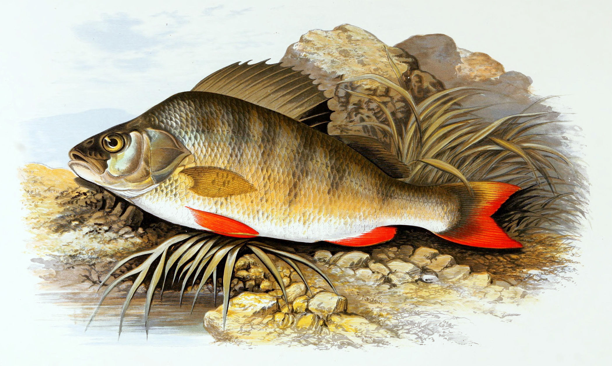 рисунки речных рыб картинки процессе пересыпания