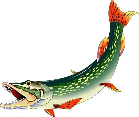 клев рыбы в кировской