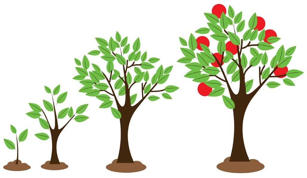 картинка как растет дерево покажем интересные дизайн-проекты