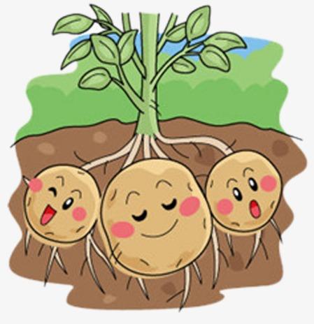 Когда сажать картофель 2019 благоприятные дни