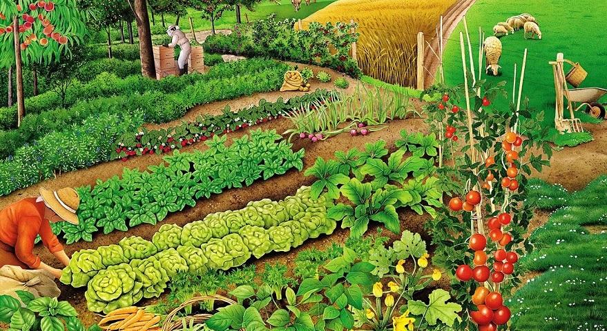 лунный календарь для посадки рассады томатов