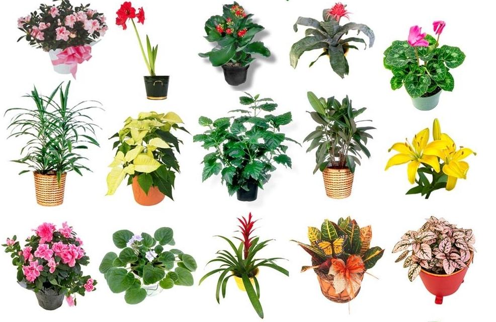 Картинки домашних растений и их названия